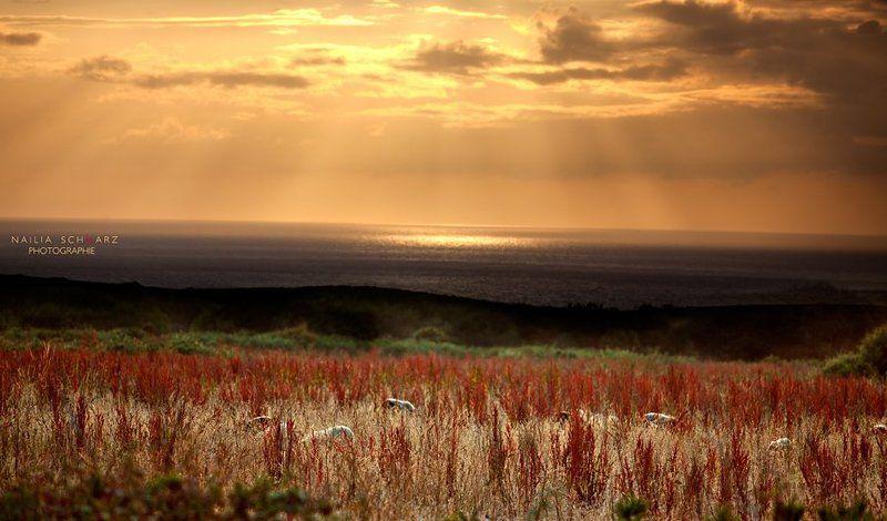 bretagne, france, бретань, франция, люди, пйзажи, океан Bretagne, Francephoto preview
