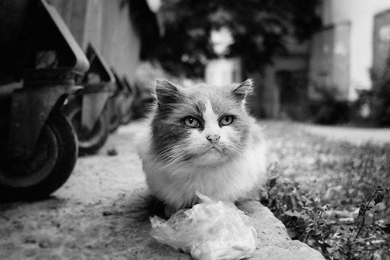 кот, город бомжикphoto preview