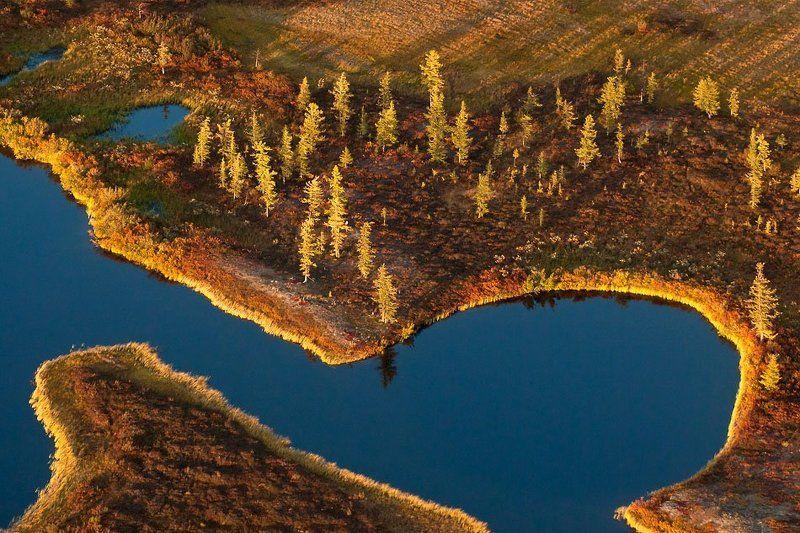 север, тундра, осень, аэросьемка сентябрьские краски тундрыphoto preview