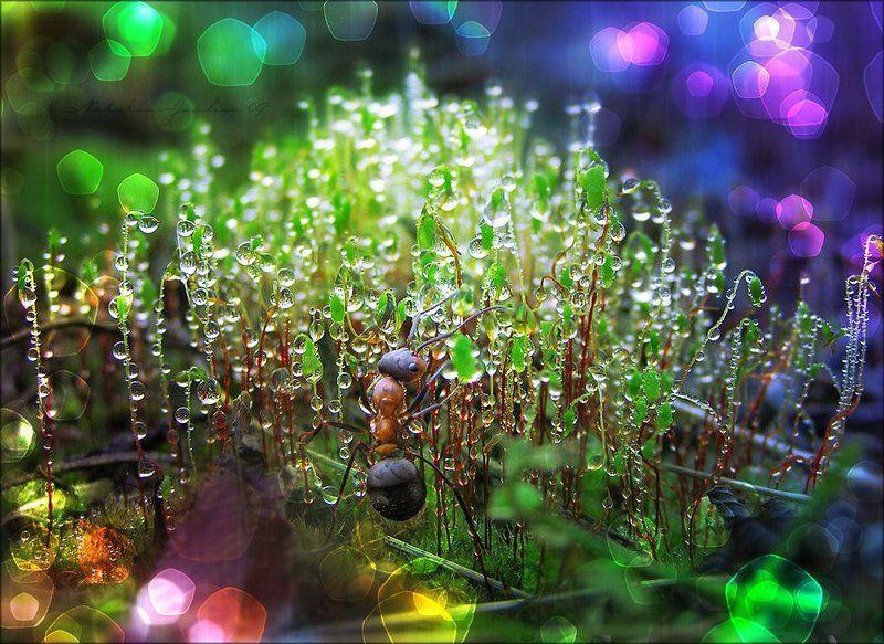 drop, water, air, капля, вода, воздух, natalia, jeshoa, art-macro, арт-макро Под пологом пьяного леса...#2photo preview