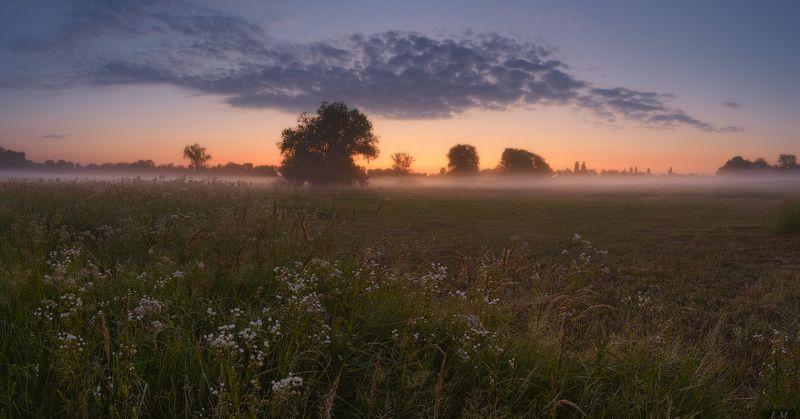 утро, рассвет, сумерки, туман, облака, лето, июль, луг, свет, панорама, пейзаж, sunrise, idyllic, dawn, horizon, dramatic sky, moody sky, tranquility, grass, sky, clouds, summer, green, outdoors, tree, light, morning, sunlight, beautiful, fog, misty, glow Morning Glowphoto preview