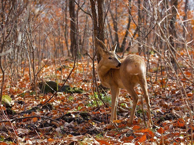 осень,приморье,листва,шуршит,тёплая осень листва шуршит...photo preview