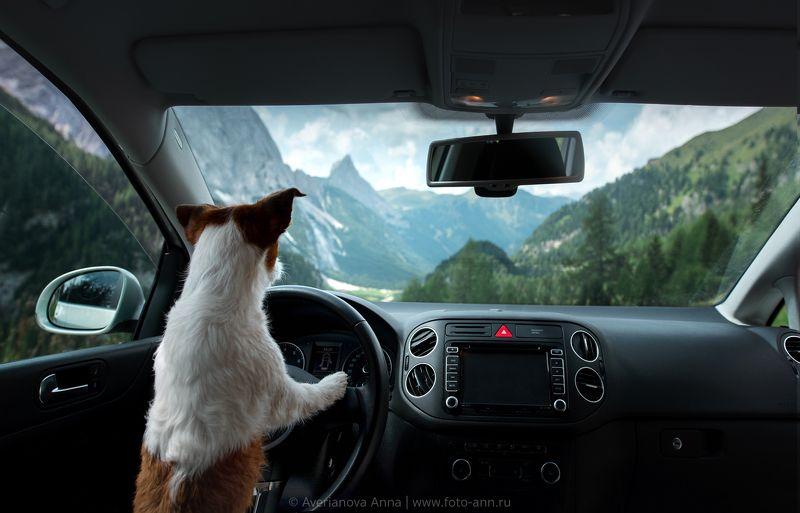 собака, горы, путешествие  Путешественница photo preview