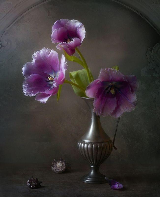 Тюльпаны и ракушкиphoto preview