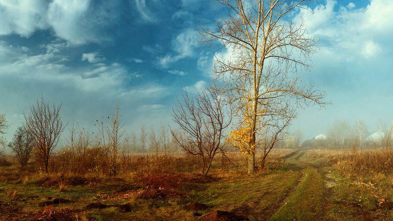 пейзаж, цвет, осень, степь, дымка, туман,  красота, контраст, дерево Луганские степиphoto preview