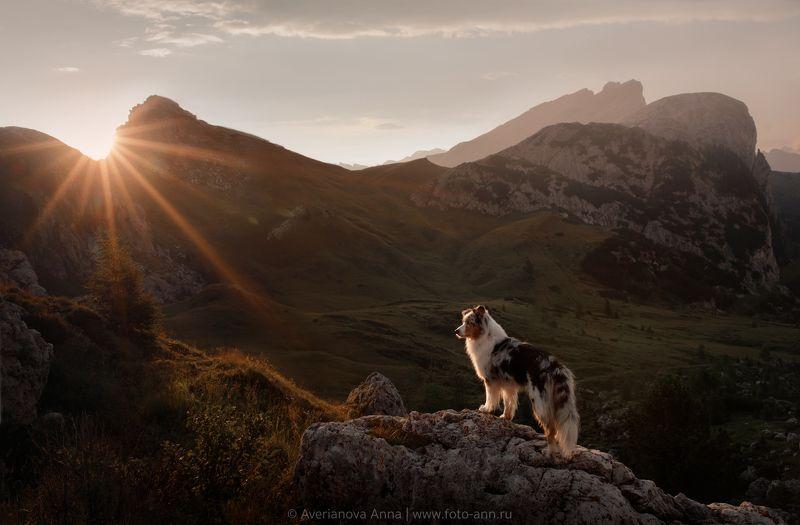 собака, закат, природа закат в горахphoto preview
