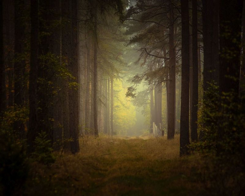 forest,road,trees,nature,autumn,sunlight,morning,nikon,mist,landscape, Dark forestphoto preview