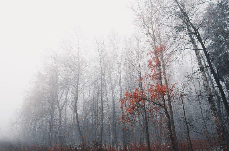 Краски увядшей осениphoto preview