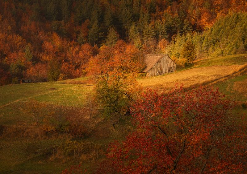 A small wooden cottage in the autumn mountainphoto preview