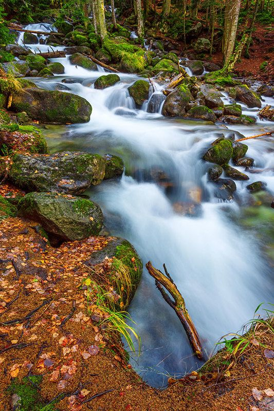 Осень, ручей, лес...photo preview
