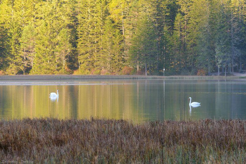 Озеро Dobbiacophoto preview
