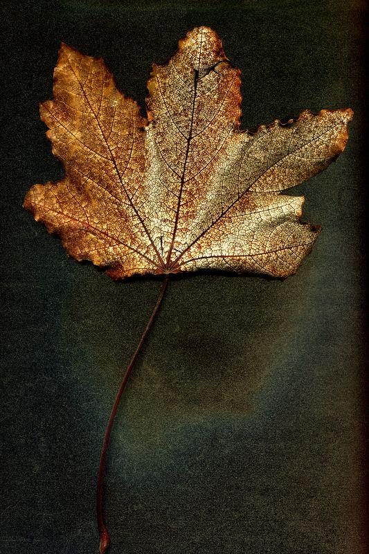Осенний листphoto preview