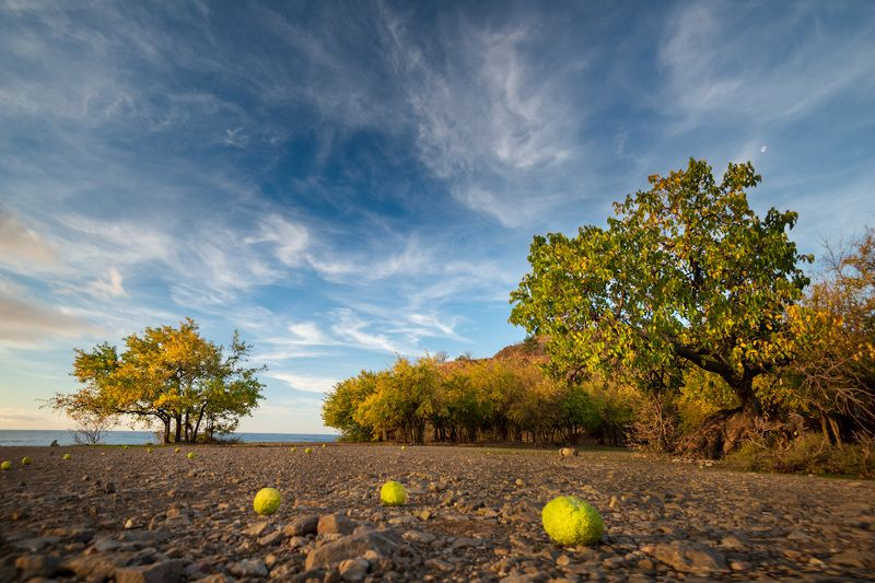 осень в маклюрной рощицеphoto preview