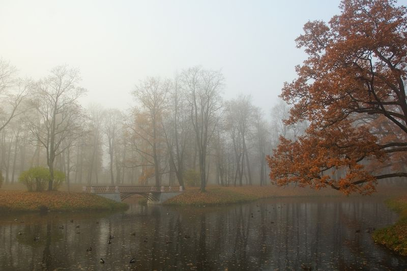 Misty autumn morning ...photo preview
