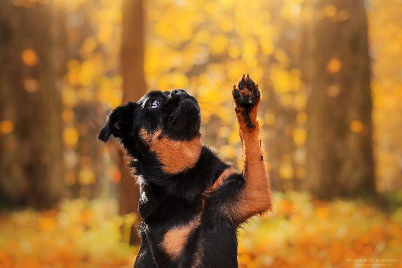 собака, осень, портрет, лайфстайл, солнце, Солнечный Кас в осеннем паркеphoto preview