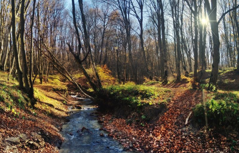ставрополь, утро, осень,лес 3 ноября 2018photo preview