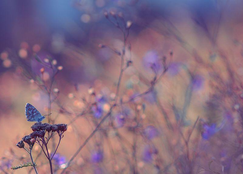 макро, насекомые, бабочки Перед прыжком в неизвестностьphoto preview