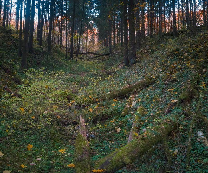 Осенняя тоскаphoto preview
