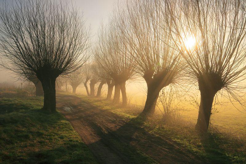 light, sun, sunrise, morning, mist, mood, willows, road, trees, autumn, Dozenphoto preview
