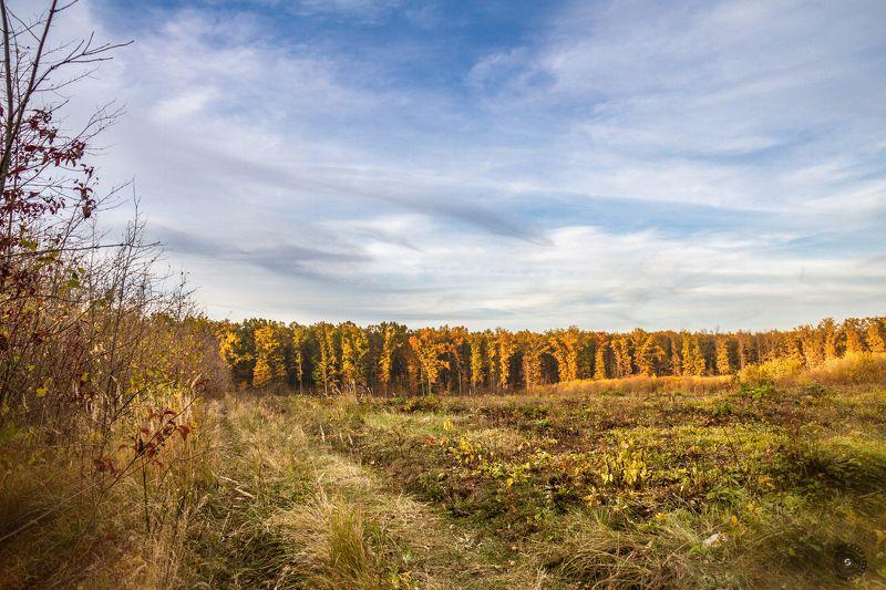 лес, поле, кусты, трава, природа, пейзаж, небо, облака, закат, ветер Лесная комната с небесным потолком...photo preview