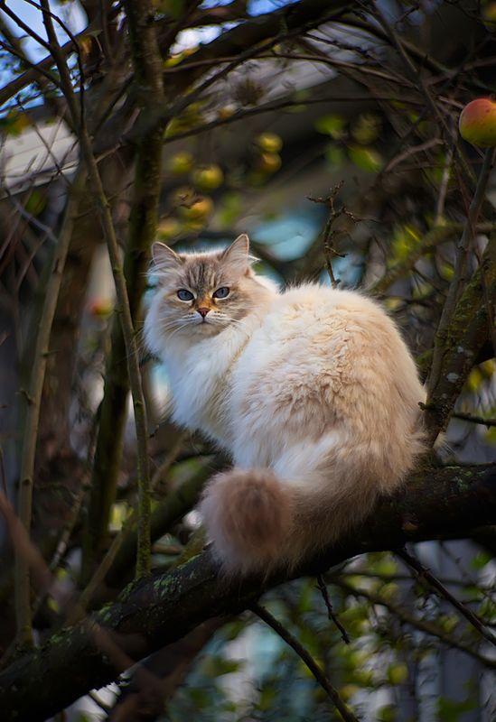 кошка, животные, яблоки, осень, природа, боке, петцваль Про яблоки, кошку и про бокеphoto preview