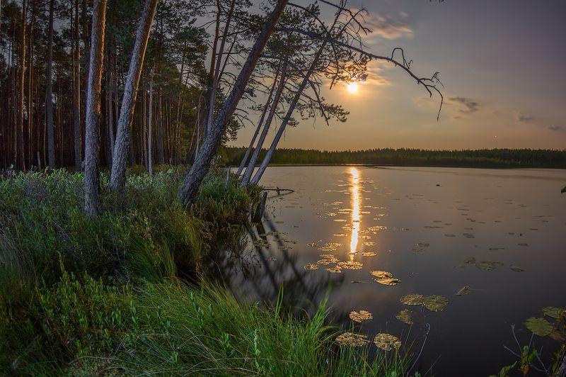луна ночь озеро лунная дорожка лес берег сумерки лунные сумерки над лесным озеромphoto preview