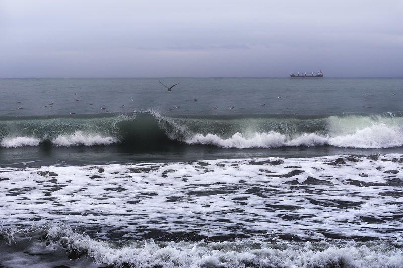 море осень волны птицы Катятся волныphoto preview