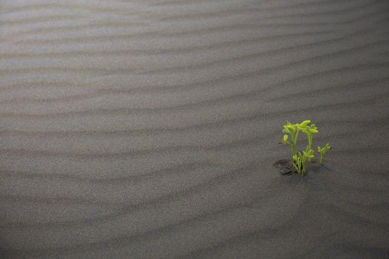 дюны растение жизнь сила Любовь к жизниphoto preview