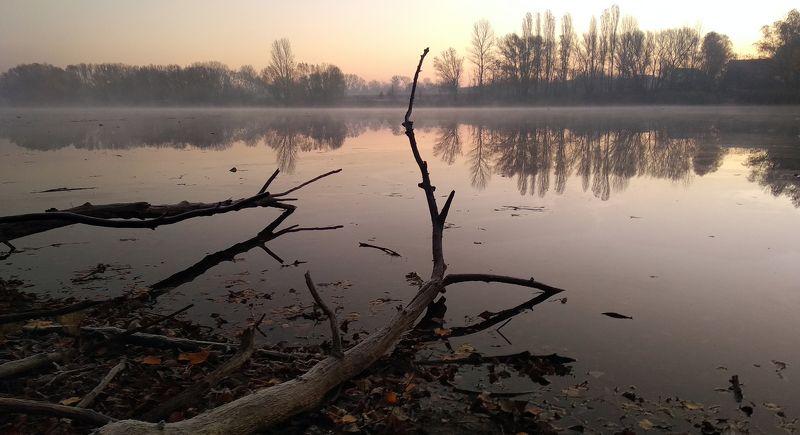 Из жизни деревьевphoto preview