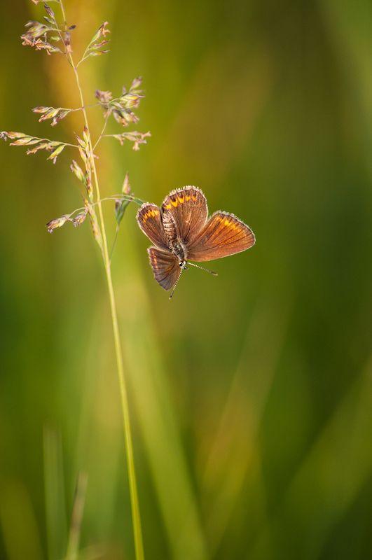 Про бабочекphoto preview