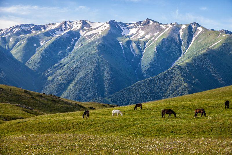 пейзаж,  природа, горы, облака, солнце, закат, лучи солнца, казахстан, величие, поле,  фотограф, алматы, фотограф алматы, landscape, the sun, nature, the mountains, awesome, amazing, kazakhstan, almaty, photographer,  sunset, beauty,  Весна в горахphoto preview