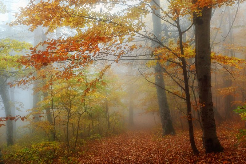 Осень в  Крымуphoto preview