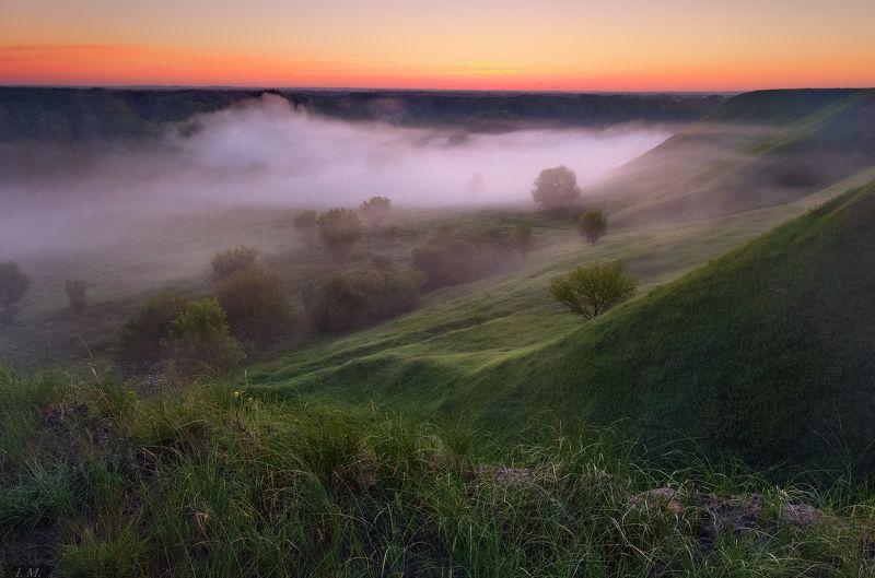 долина, лето, рассвет, туман, холмы, fog, landscape, light, nature, summer, hills, misty, velvet, foggy dawn Бархатные склоны ..photo preview