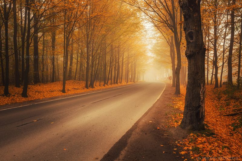 forest, poland, polish, landscape, trees, light, awesome, shadows, fog, mist, beautiful, bend, colours, road, street On the bendphoto preview