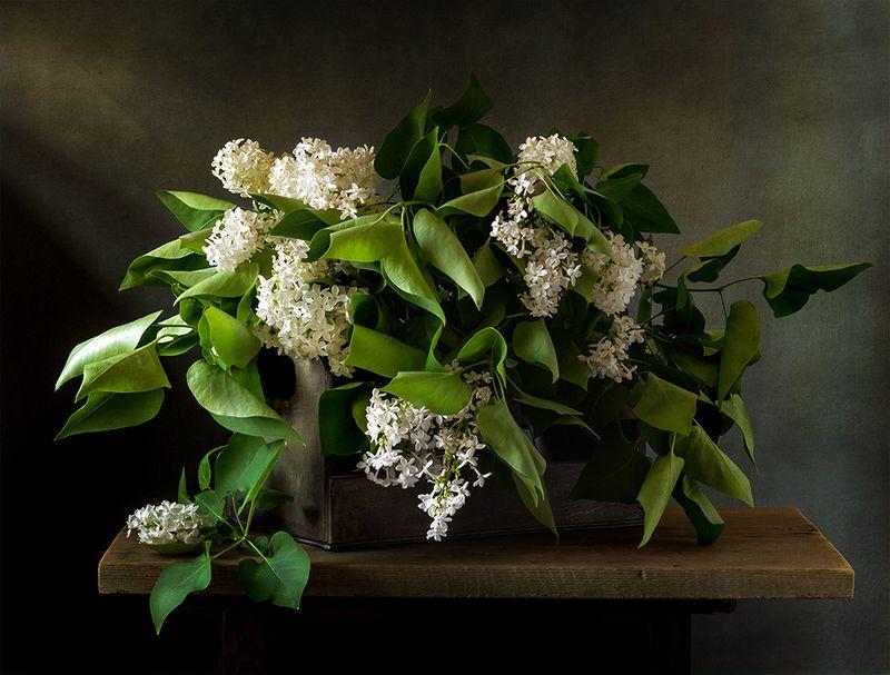 натюрморт, цветы, still life О белой сирени...photo preview