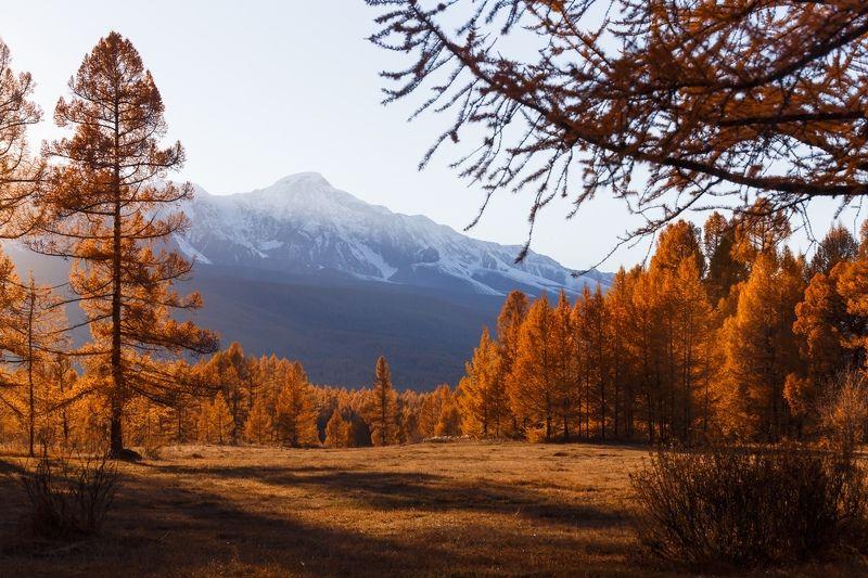 природа, алтай, горы, лес, осень, закат, солнце, nature, sunset, mountains, forest, autumn, light Золотой закатphoto preview