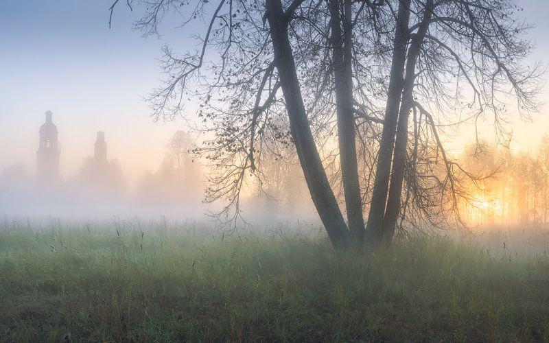 утро, туман, дерево, осень Утренняя тишинаphoto preview