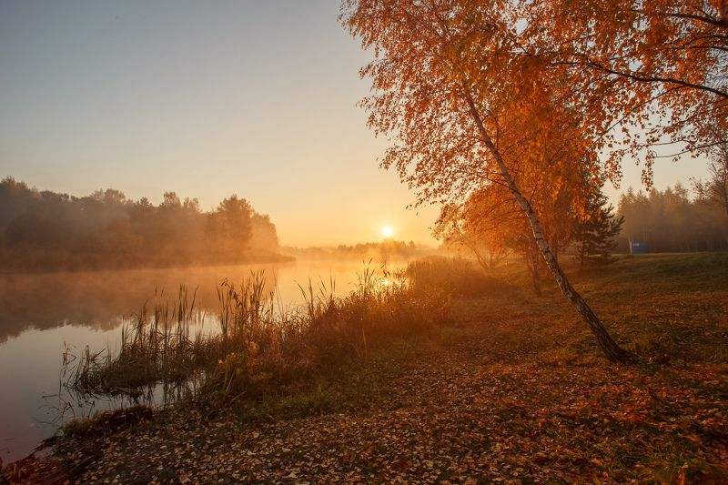 утро, рассвет, лучи, криница, туман, лес, озеро, минск, беларусь С первыми лучами солнцаphoto preview