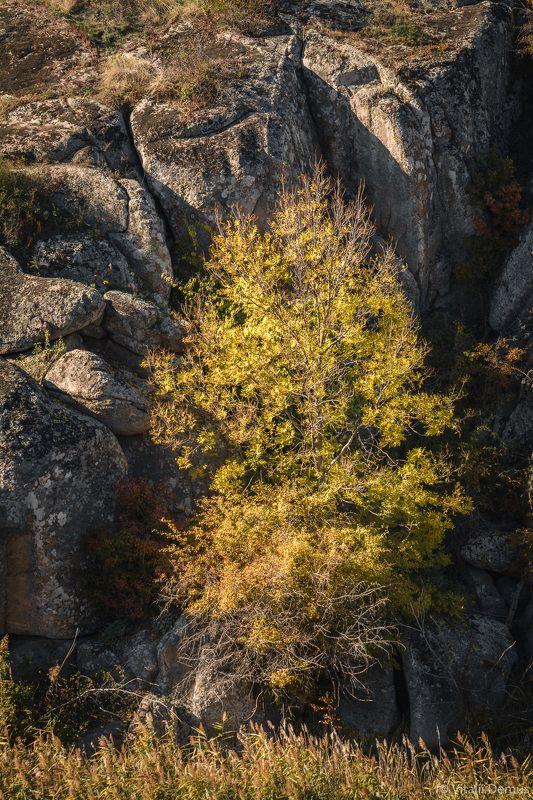 осень, желтый, закат, вечер, природа, свет, солнечный свет, контраст, дерево Дерево в окружении камней. Актовский каньон.photo preview