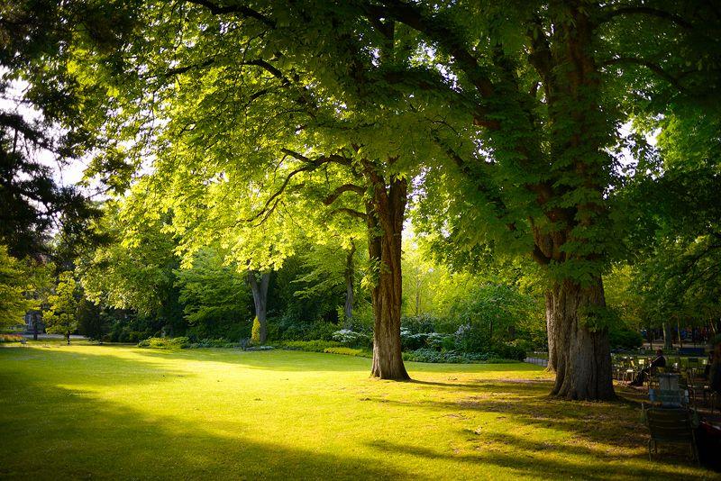 paris, jardin du luxembourg май в люксембургском садуphoto preview