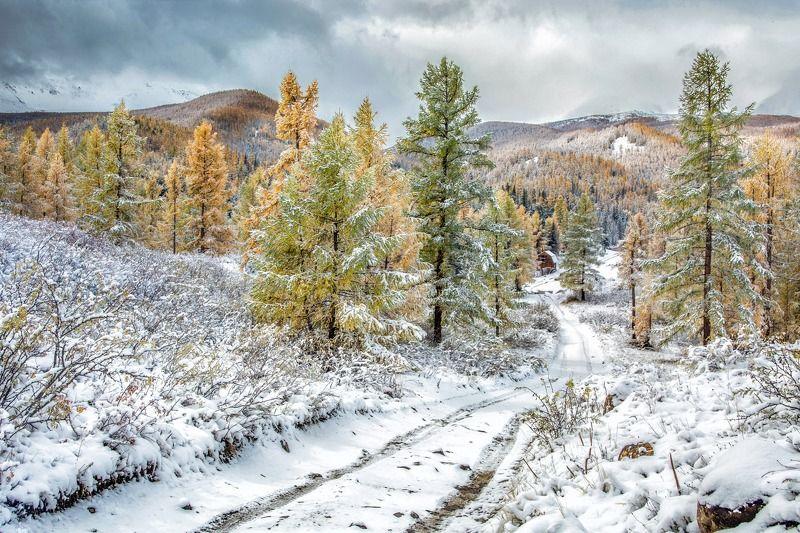 алтай,осень по первому снегуphoto preview