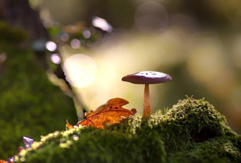 грибы азербайджан набрань кавказ осень лес мох красота природа Последние грибы уходящей осени.photo preview