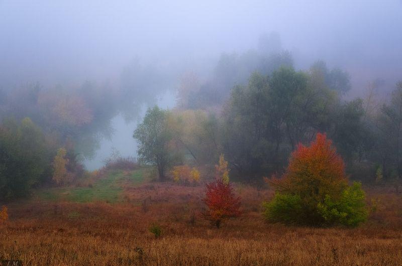 осень, туман, утро, цвета, косогор, деревья, краски, trees, colors, foggy, autumn, fall, fog, landscape, mood, morning, осенние акварели ..photo preview
