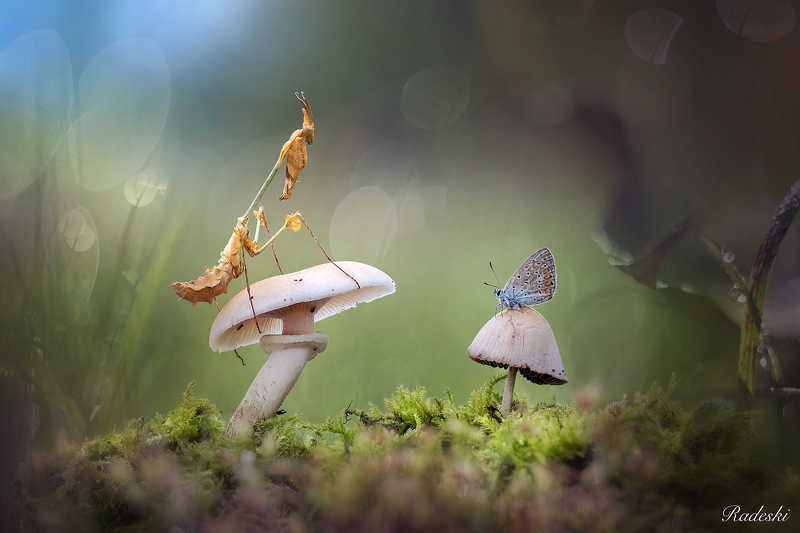 The fairy tale in the woodsphoto preview