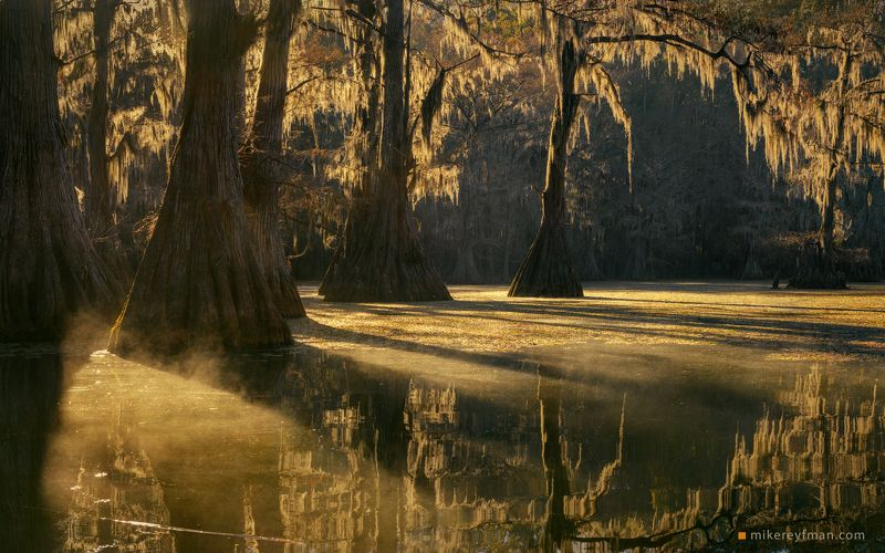 cypress tree; tupelo tree; bald cypress; taxodium distichum; bald cypress knees; spanish moss; tillandsia usneoides; texas; big cypress bayou area; southeastern wetlands; flooded; fog; moody; uncertain; landscape; light; wildlife; outdoors; beautiful; pho Утро на Болотеphoto preview