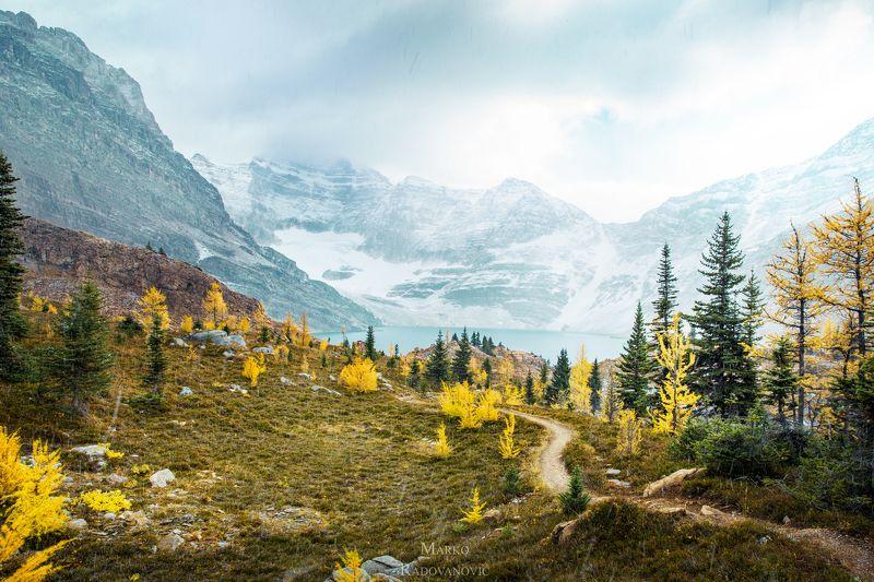 лиственница, канада, осень, снег, холод, золотой, деревья, пейзаж, природа, британская колумбия, альпийский, горы, озеро, #canada #britishcolumbia #bc #yoho #yohonationalpark #larchseason #amazingnature #explorecanada #canadainpictures #autumncolors #autu Trail and lakephoto preview