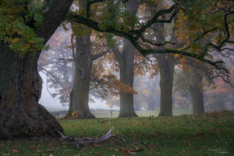 autumn, branches, fall, fall trees, fog, foggy, foliage, grass, horse, horse pasture, horses, leaf, meadow, mist, misty, moss, nature, oak, oak leaves, oak pasture, oak trees, oak -wood, orange, outdoor, pasture, tree branches, tree trunk, trees, wood, ye Fall\'ing in Love with the Taophoto preview