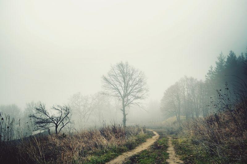 fog, landscape, autumn, туман, пейзаж, осень In the fogphoto preview