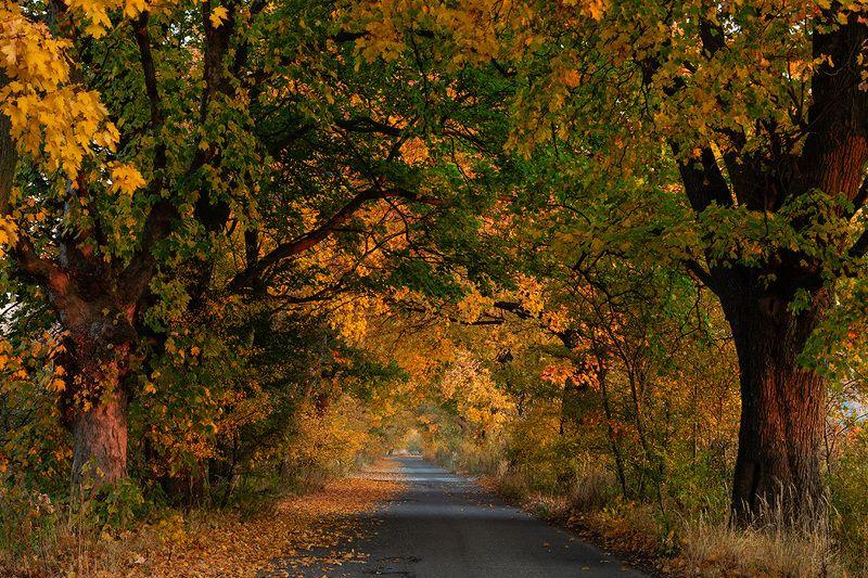Gold autumn фото превью