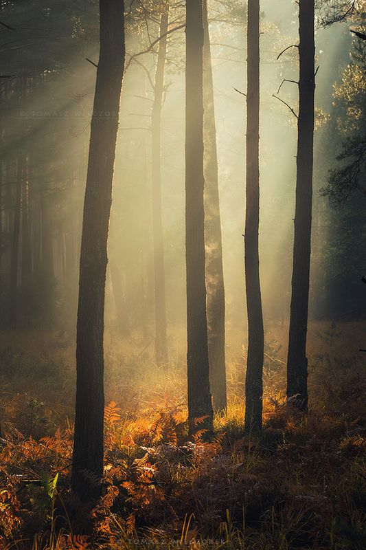 forest, poland, polish, landscape, mushroom, trees, light, awesome, shadows, fog, mist, beautiful, breathe, autumn The forest breathed with me фото превью